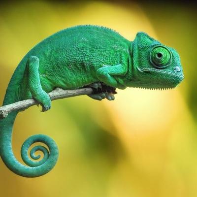 chameleonbones@spinster.xyz